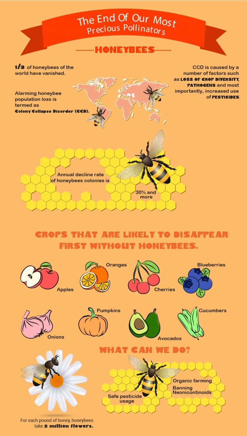 infographic honeybee extinction