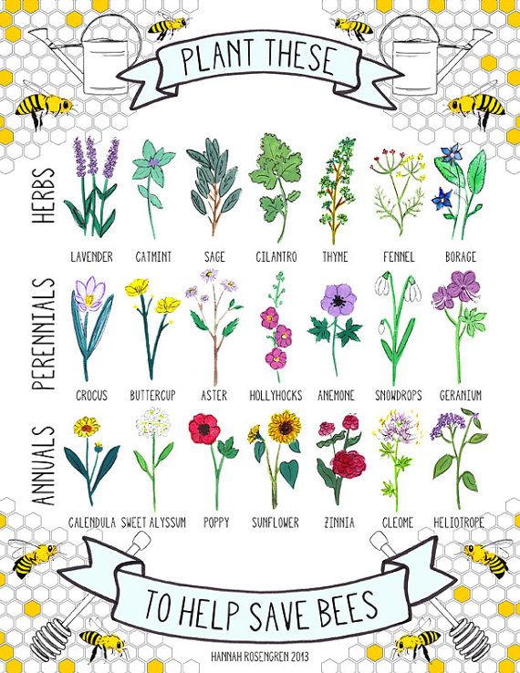 pollinator friendly infographic
