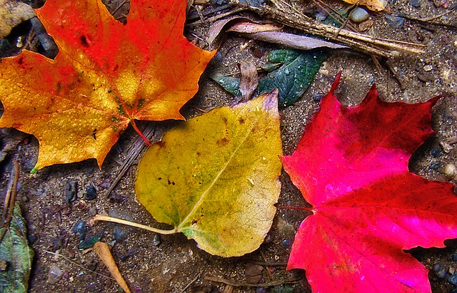 5 Reasons to Leave the Leaves